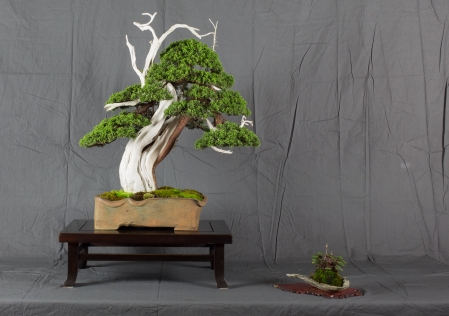 CONGRESSO BONSAI RIVALTA MAR 2017-3