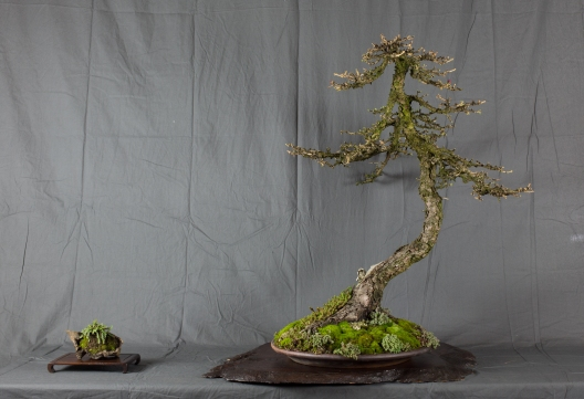 CONGRESSO BONSAI RIVALTA MAR 2017-31