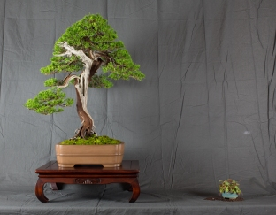 CONGRESSO BONSAI RIVALTA MAR 2017-32