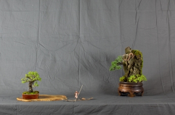 CONGRESSO BONSAI RIVALTA MAR 2017-34