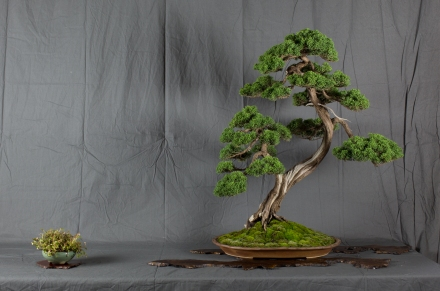 CONGRESSO BONSAI RIVALTA MAR 2017-35