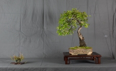 CONGRESSO BONSAI RIVALTA MAR 2017-36