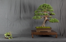 CONGRESSO BONSAI RIVALTA MAR 2017-37