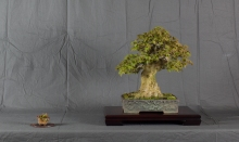 CONGRESSO BONSAI RIVALTA MAR 2017-38