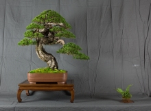 CONGRESSO BONSAI RIVALTA MAR 2017-39