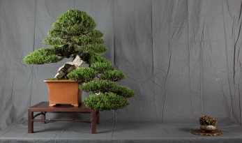 CONGRESSO BONSAI RIVALTA MAR 2017-4