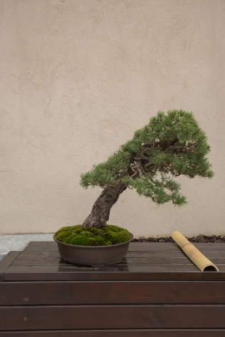 CONGRESSO BONSAI RIVALTA MAR 2017-44