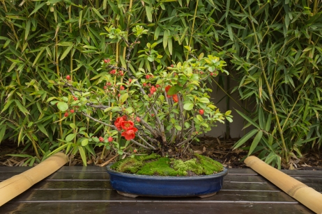 CONGRESSO BONSAI RIVALTA MAR 2017-48