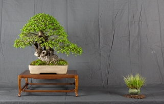 CONGRESSO BONSAI RIVALTA MAR 2017-5