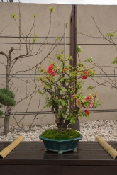 CONGRESSO BONSAI RIVALTA MAR 2017-53