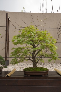 CONGRESSO BONSAI RIVALTA MAR 2017-57