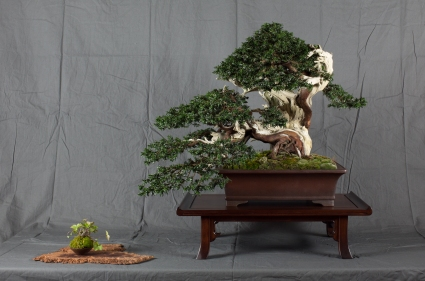 CONGRESSO BONSAI RIVALTA MAR 2017-6