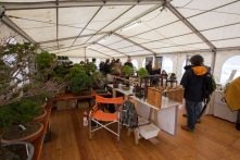CONGRESSO BONSAI RIVALTA MAR 2017-72